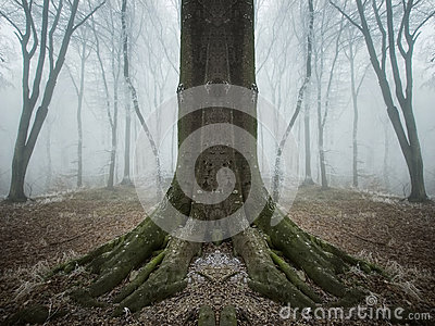 Surreal symmetrical tree in a forest with fog and frost Stock Photo