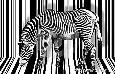 Zebra Black amp White  Key Chains  Wristlets  Pinterest