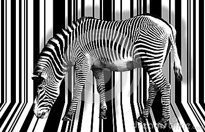 Surreal zebra