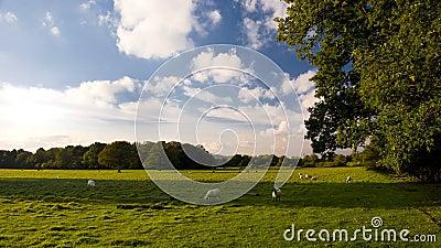 Surrey Hills, England.