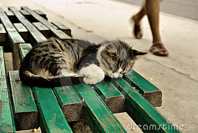 Suspend kitten on a bench