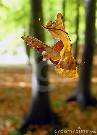Suspended fall