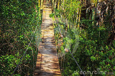 Suspended walking bridge in jungle