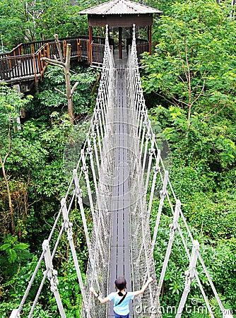 Suspension bridge, nature park