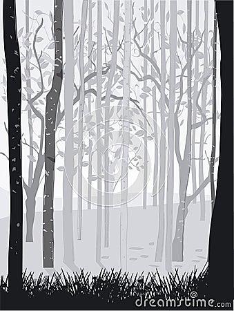 Svart skogwhite
