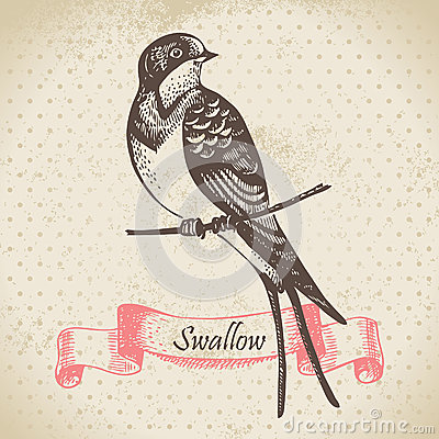 Swallow bird, hand drawn illustration