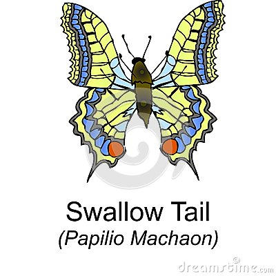 Swallow Tail Butterfy