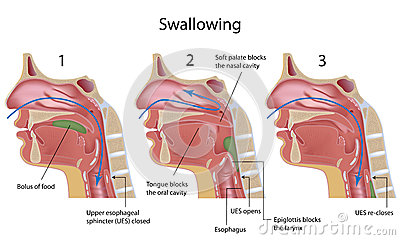 Swallowing process
