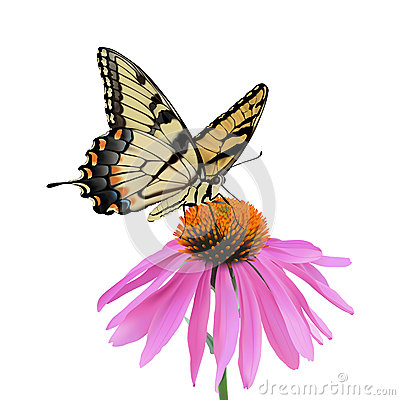 Free Swallowtail Butterfly And Coneflower Royalty Free Stock Photography - 43510347
