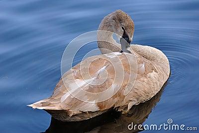 Swam in lake