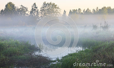 Swamp in the fog
