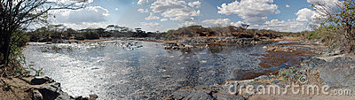 Swamp in the Serengeti - Panoramic view