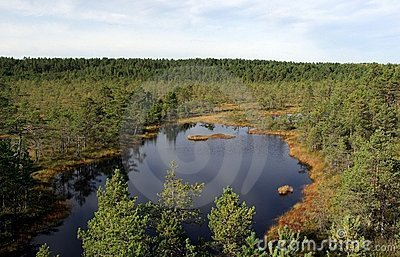 Swamp Viru  in Estonia.The nature of Estonia.