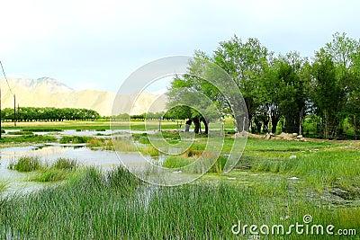 The swampland of tibet