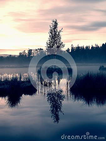 Free Swampy  Lake With Mirror Water Level In Mysterious Forest, Young Tree On Island In Middle. Fresh Green Color Of Herbs And Grass, B Royalty Free Stock Images - 55588329