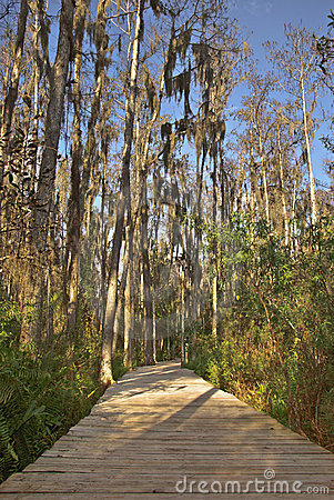 Swampy path in the everglades