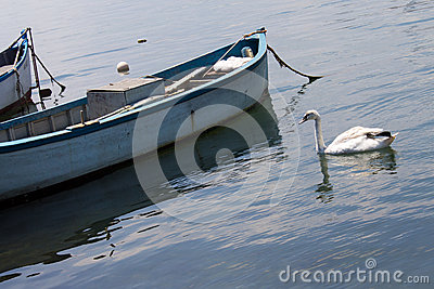Swan and boat