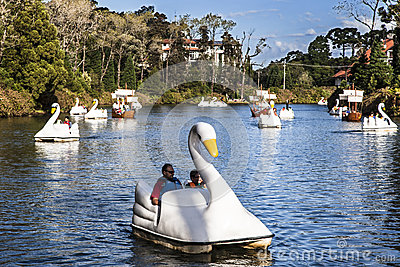 Swan Boats on Dark Lake Gramado Brazil Editorial Photography