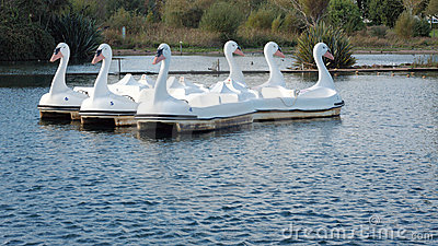 Model Swan Boats on a Lake