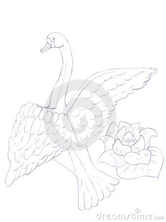 Swan and flower sketch