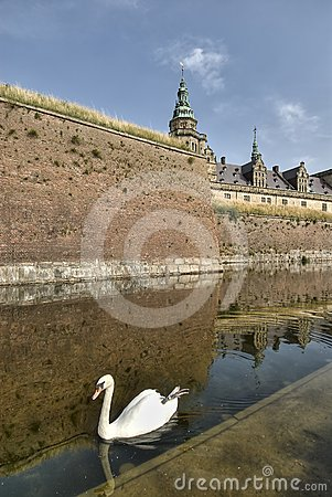 Swan at Hamlet s Castle of Kronborg