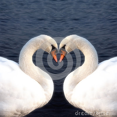 Free Swan Heart Stock Image - 26493231