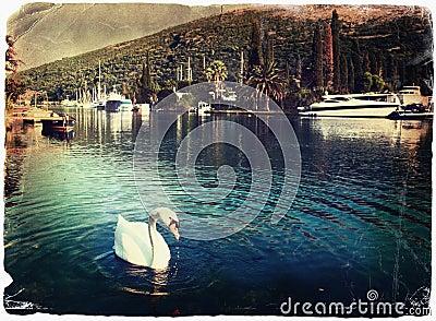 Swan at the lagoon