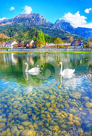 Free Swan Lake Innsbruck Austria Stock Photos - 112632243