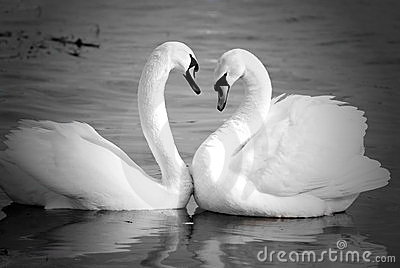 Swan necks forming love heart