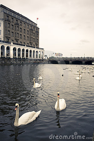 Swans on an Alster canal, Hamburg