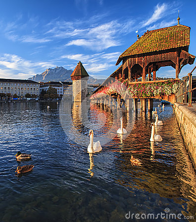 Swans at the Chapel Bridge in Lucerne, Switzerland