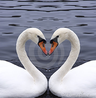 Free Swans Heart Royalty Free Stock Image - 1341316