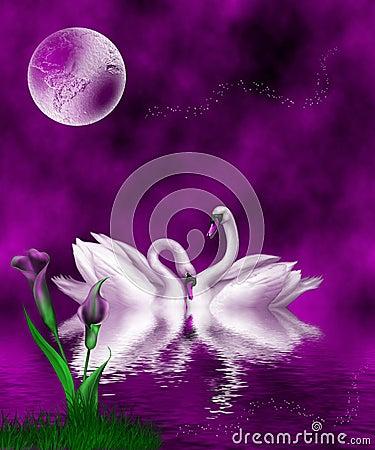 Swans Violet
