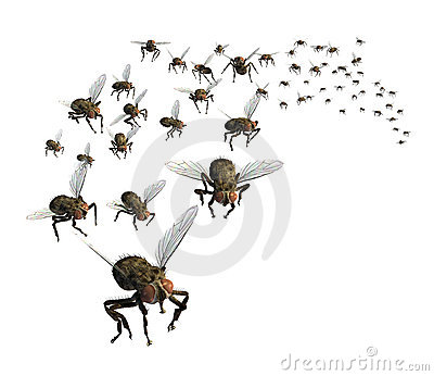 Swarm of Flies