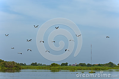 Swarm of storks
