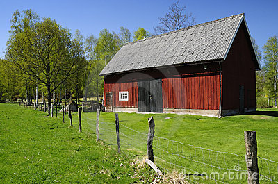 Swedish barn for cattle