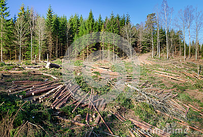 Swedish deforestation