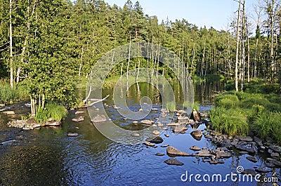 Swedish salmon area