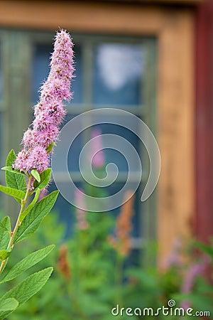 Swedish wildflower in Skansen