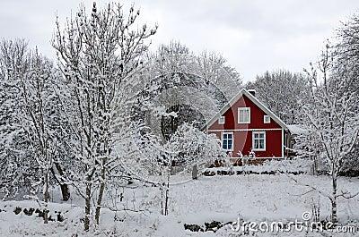 Swedish winter contrasts