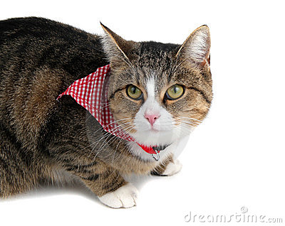 Sweet cat with bandana