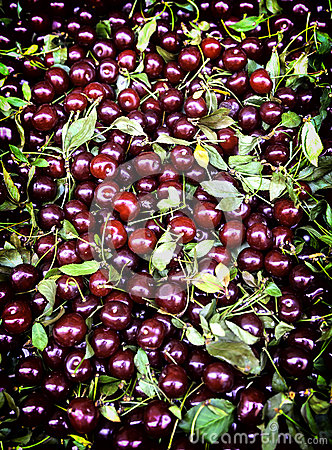 Free Sweet Cherries In A Group Stock Photography - 32201562