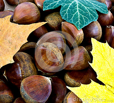 Sweet chestnut background