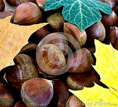 Sweet chestnut background