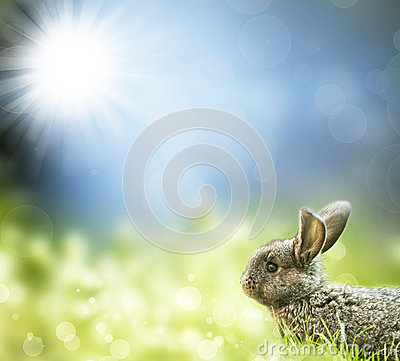 Sweet Easter bunny in the spring meadow