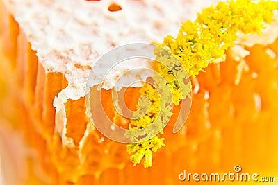 Sweet honeycomb with honey