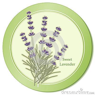 Sweet Lavender Herb Icon