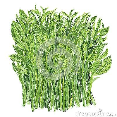 Free Sweet Leaf Bush Royalty Free Stock Photos - 29947408