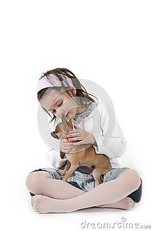 Sweet little dog
