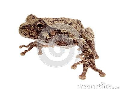 Sweet little frog
